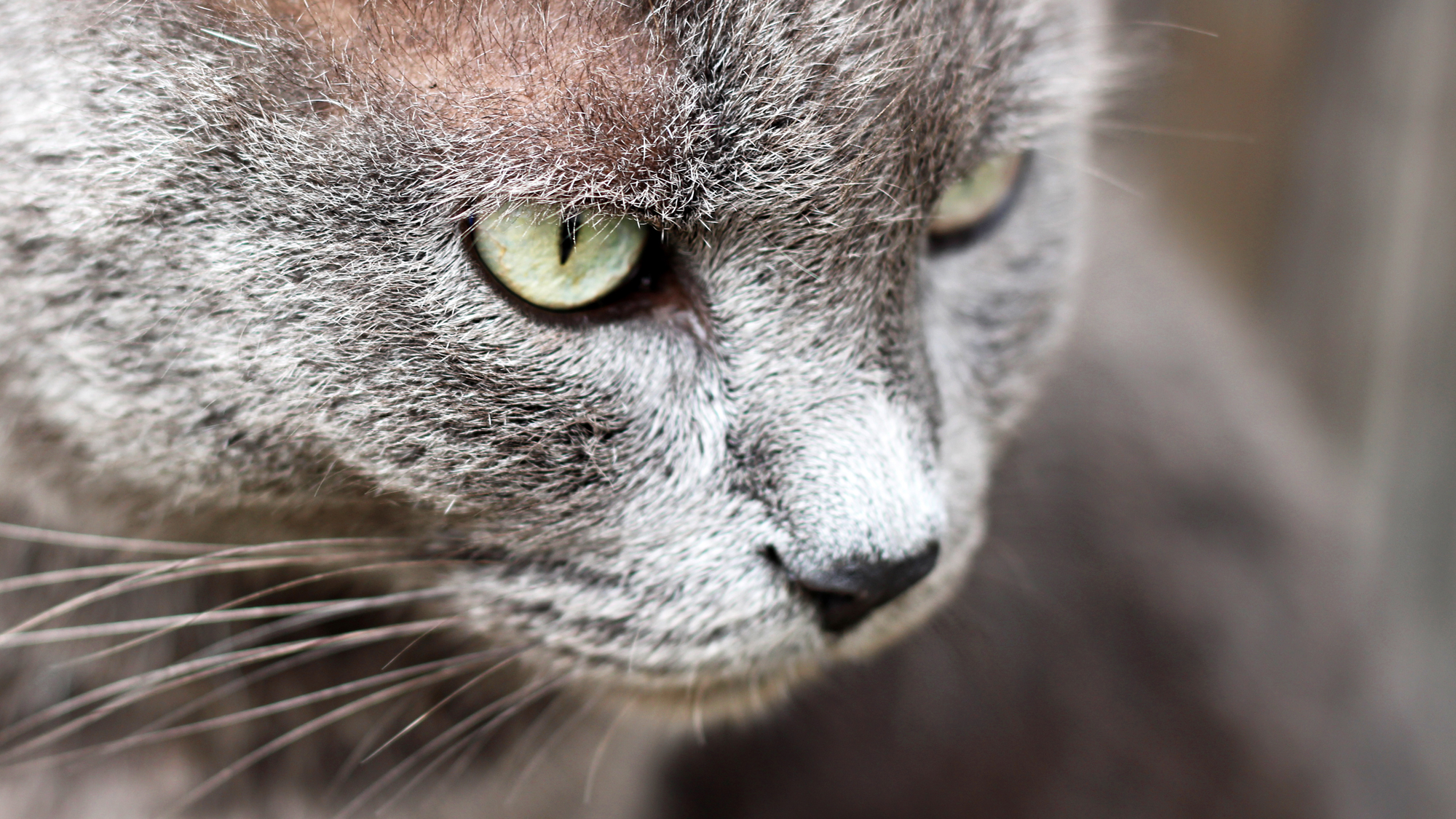 Carefree Cattery Cats Eyes